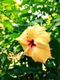Flor - naturaleza y hermoso imágenes de archivo libres de regalías