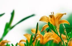 Flor, natureza Foto de Stock Royalty Free