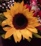 Flor no amarelo imagens de stock royalty free