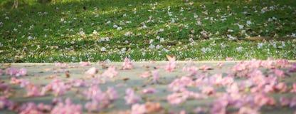 A flor no assoalho Fotografia de Stock