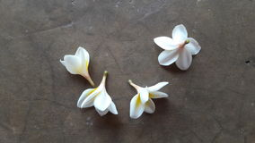 flor no assoalho Imagem de Stock Royalty Free