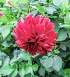 A flor no canteiro de flores Foto de Stock