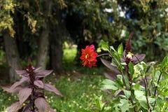 Flor no canteiro de flores Imagens de Stock