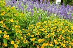 Flor no chiangmai Tailândia Fotografia de Stock