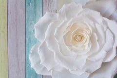 A flor no fundo Imagens de Stock