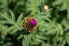 Flor no fundo difuso fotografia de stock