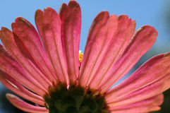 Flor no fundo do céu Fotografia de Stock Royalty Free