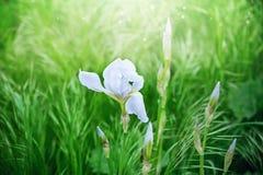 Flor no fundo verde Foto de Stock