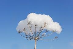 Flor no inverno Imagens de Stock Royalty Free