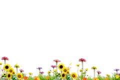 Flor no isolado Foto de Stock