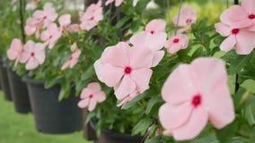 Flor no jardim filme