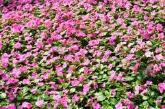 Flor no jardim Imagem de Stock Royalty Free