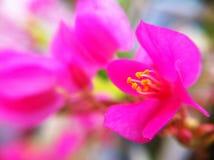 Flor no jardim Imagens de Stock