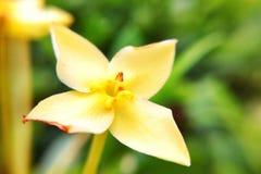 Flor no jardim Foto de Stock