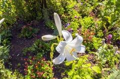 A flor no jardim Fotos de Stock