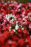 Flor no jardim Foto de Stock Royalty Free