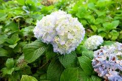 A flor no jardim Imagens de Stock