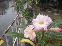 Flor no jardim Imagens de Stock Royalty Free