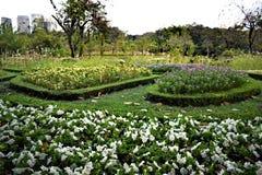 Flor no jardim imagem de stock