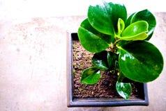 Flor no jardim em casa fotos de stock royalty free