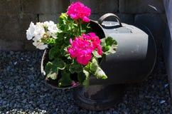 Flor no jarro fotografia de stock royalty free