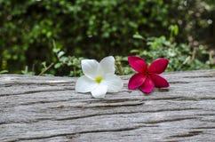 Flor no log velho Fotografia de Stock Royalty Free