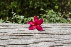 Flor no log velho Fotos de Stock Royalty Free