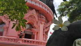 Flor no museu Foto de Stock