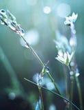 Flor no orvalho Imagem de Stock Royalty Free