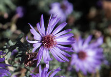 Flor no outono Fotos de Stock Royalty Free