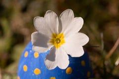 Flor no ovo da páscoa azul Foto de Stock Royalty Free