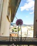 Flor no paraíso foto de stock royalty free