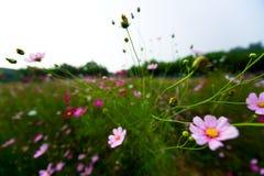 Flor no parque fotografia de stock