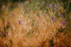 Flor no prado do verão Fotografia de Stock Royalty Free