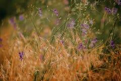 Flor no prado do verão Imagem de Stock Royalty Free