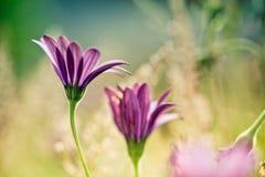 Flor no prado do ver imagem de stock