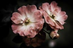 Flor no projeto preto da flor Imagem de Stock