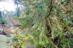 Flor no ramo da árvore que mostra o oldness Com o céu em seu fundo imagens de stock royalty free