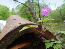 Flor no telhado foto de stock royalty free