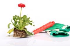Flor no trowel de jardinagem Fotos de Stock Royalty Free
