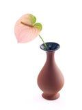 Flor no vaso Fotografia de Stock Royalty Free