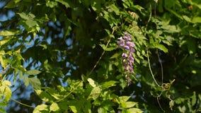 Flor no vento vídeos de arquivo