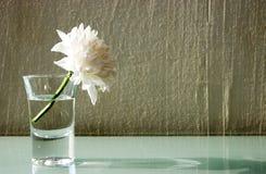 Flor no vidro Foto de Stock Royalty Free