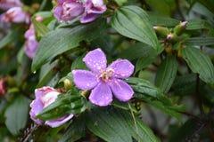 Flor no vulcão fotografia de stock royalty free