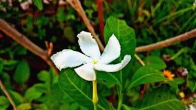 Flor nuevamente llevada del brote Fotos de archivo
