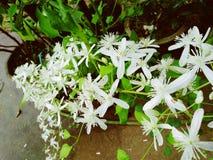 Flor nupcial do ramalhete foto de stock