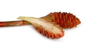 Flor o zirumbet del jengibre aislado en blanco fotografía de archivo
