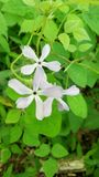 Flor ocultada Fotografía de archivo