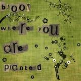 Flor onde você é plantado ilustração stock