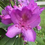 Flor onde você é plantado Fotografia de Stock